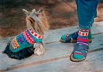 Fiber Trends Walking The Dog - Socks & Dog Coat